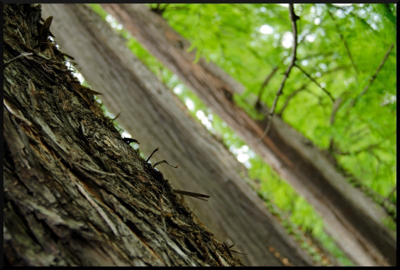 Nature en longeur