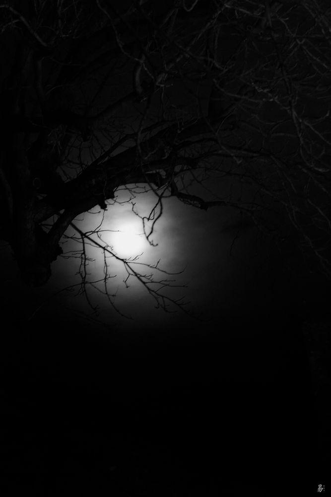 nature fine night - moonlight eye