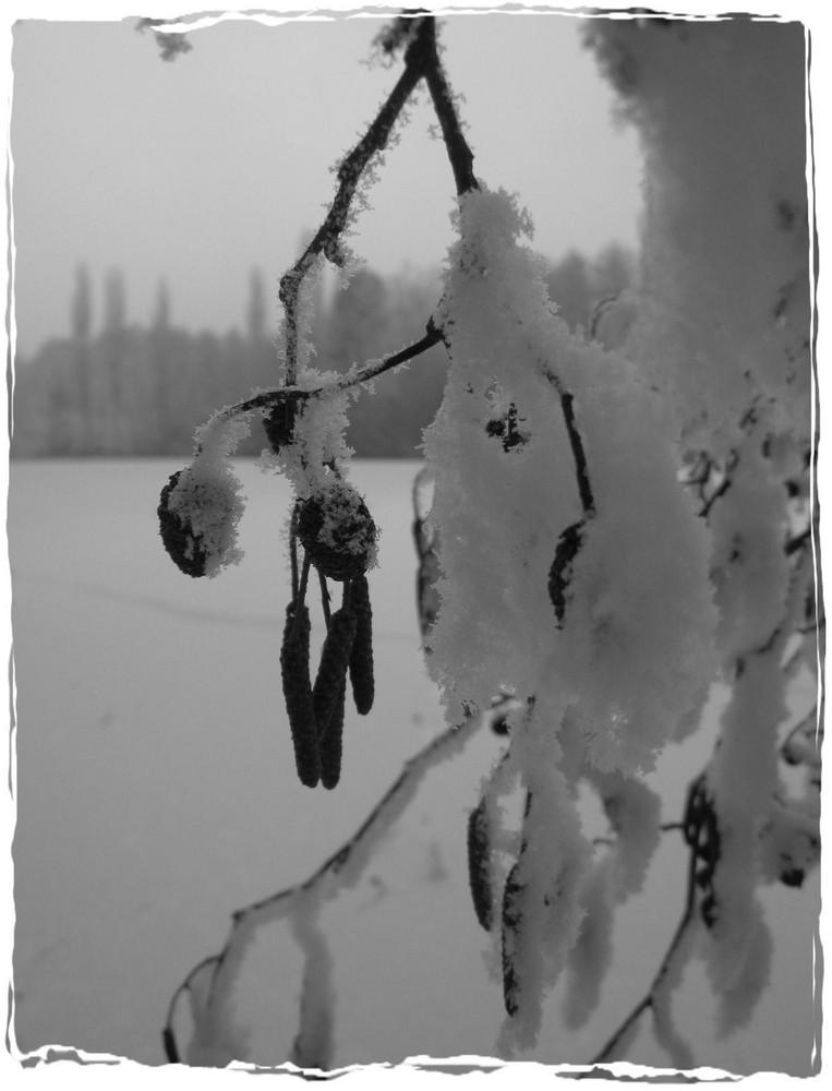nature gelée...