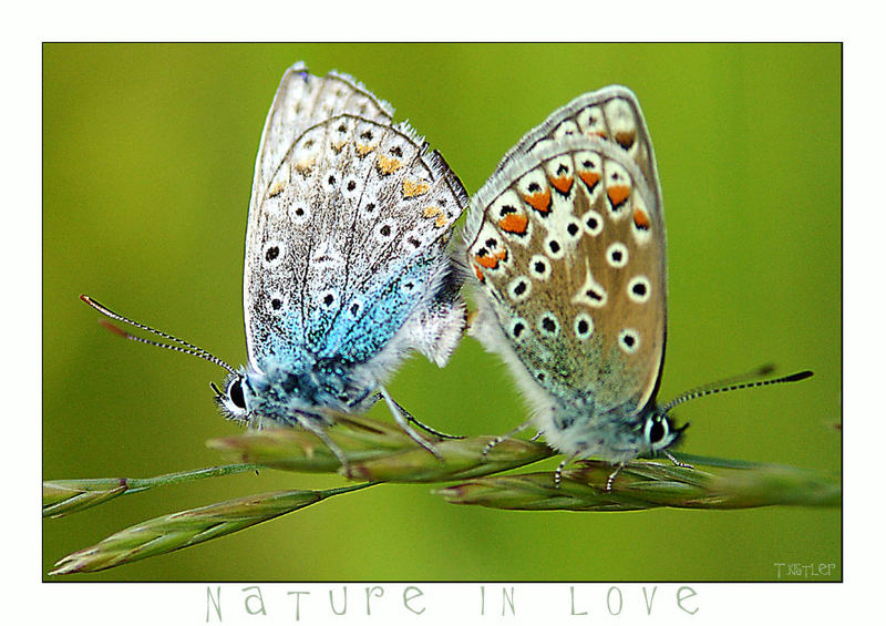 Nature in Love