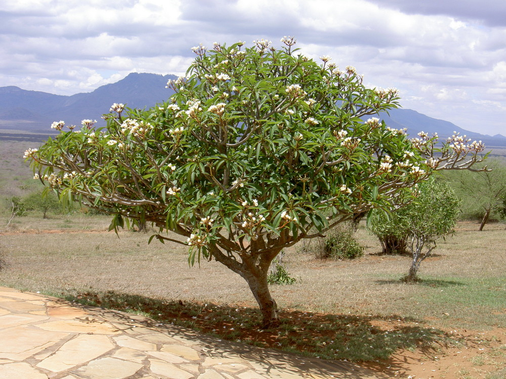 Nature in Tsavo-East