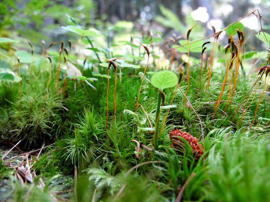 Nature miniature