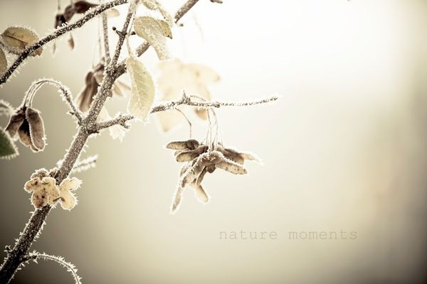 .nature moments.