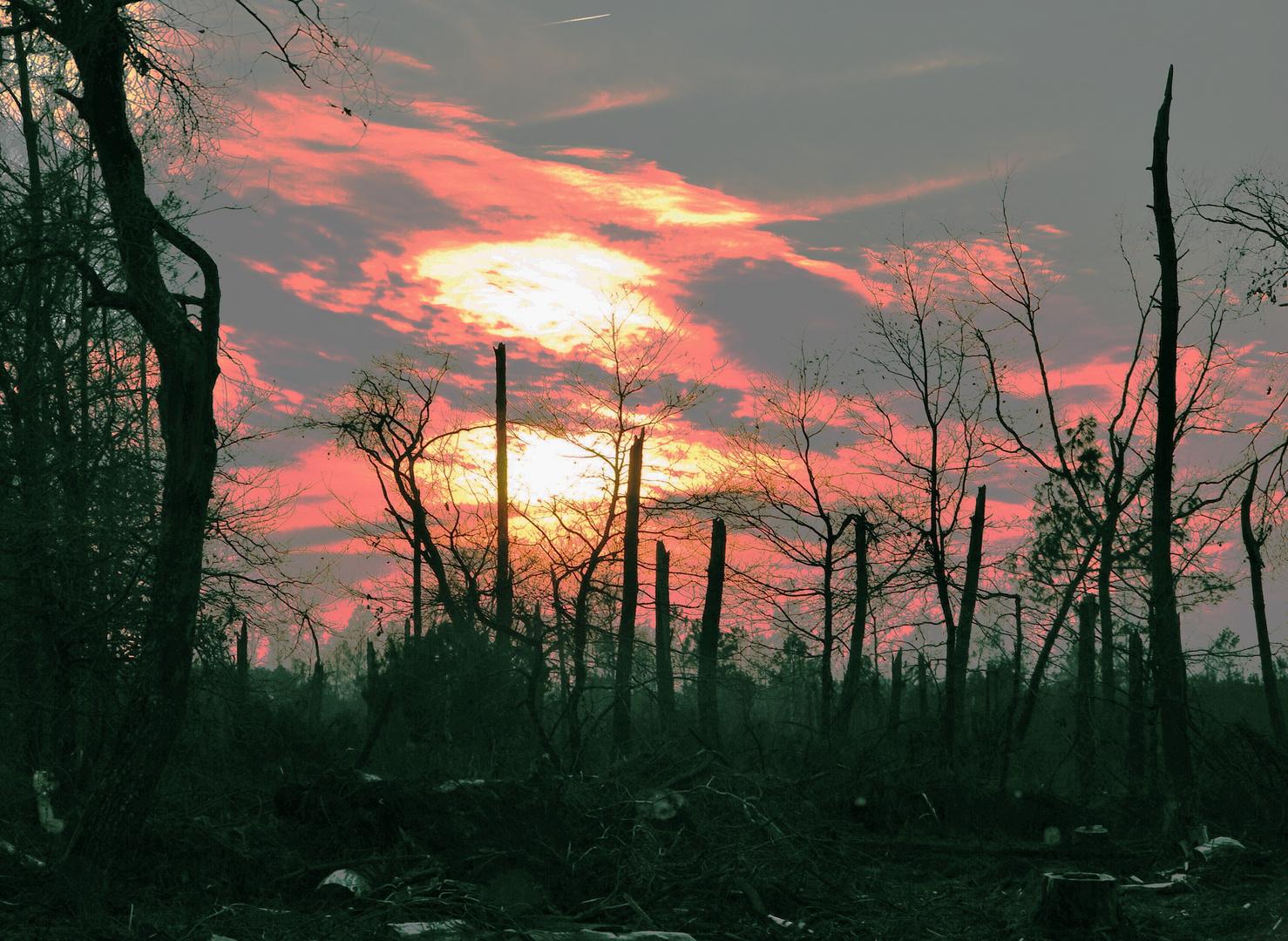 Nature morte...