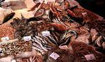 Nature morte avec poisson vivant