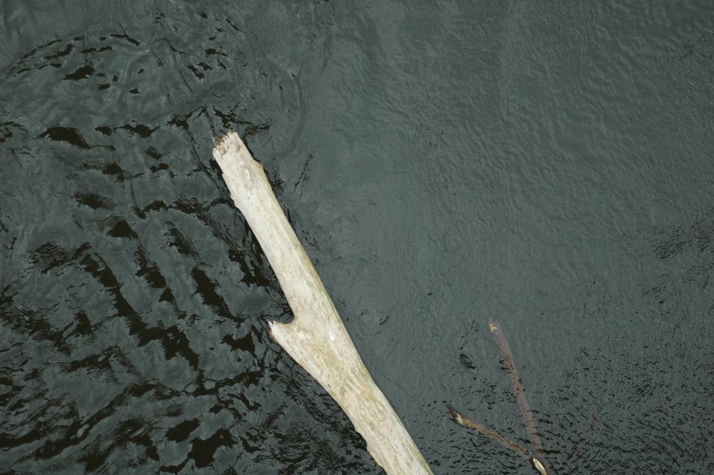 Nature morte et eau vive