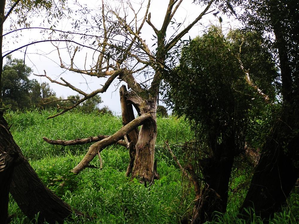 nature morte - im Wortsinne