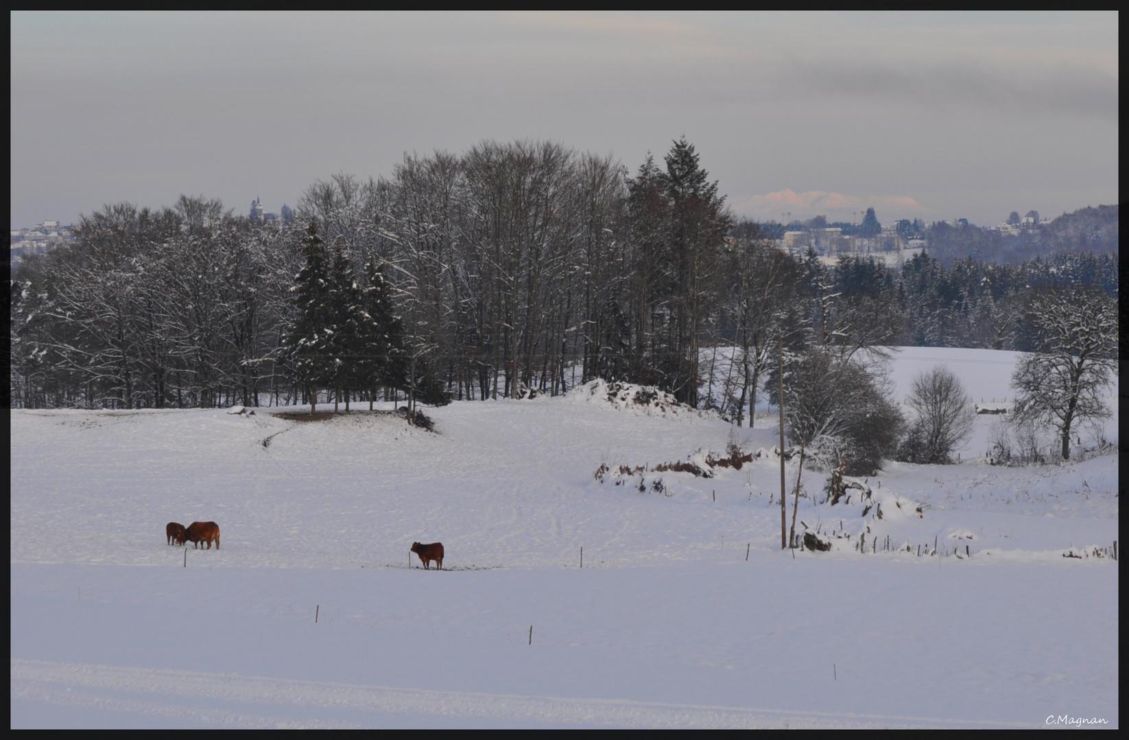 """nature, neige, montagne """" la Corrèze """""""