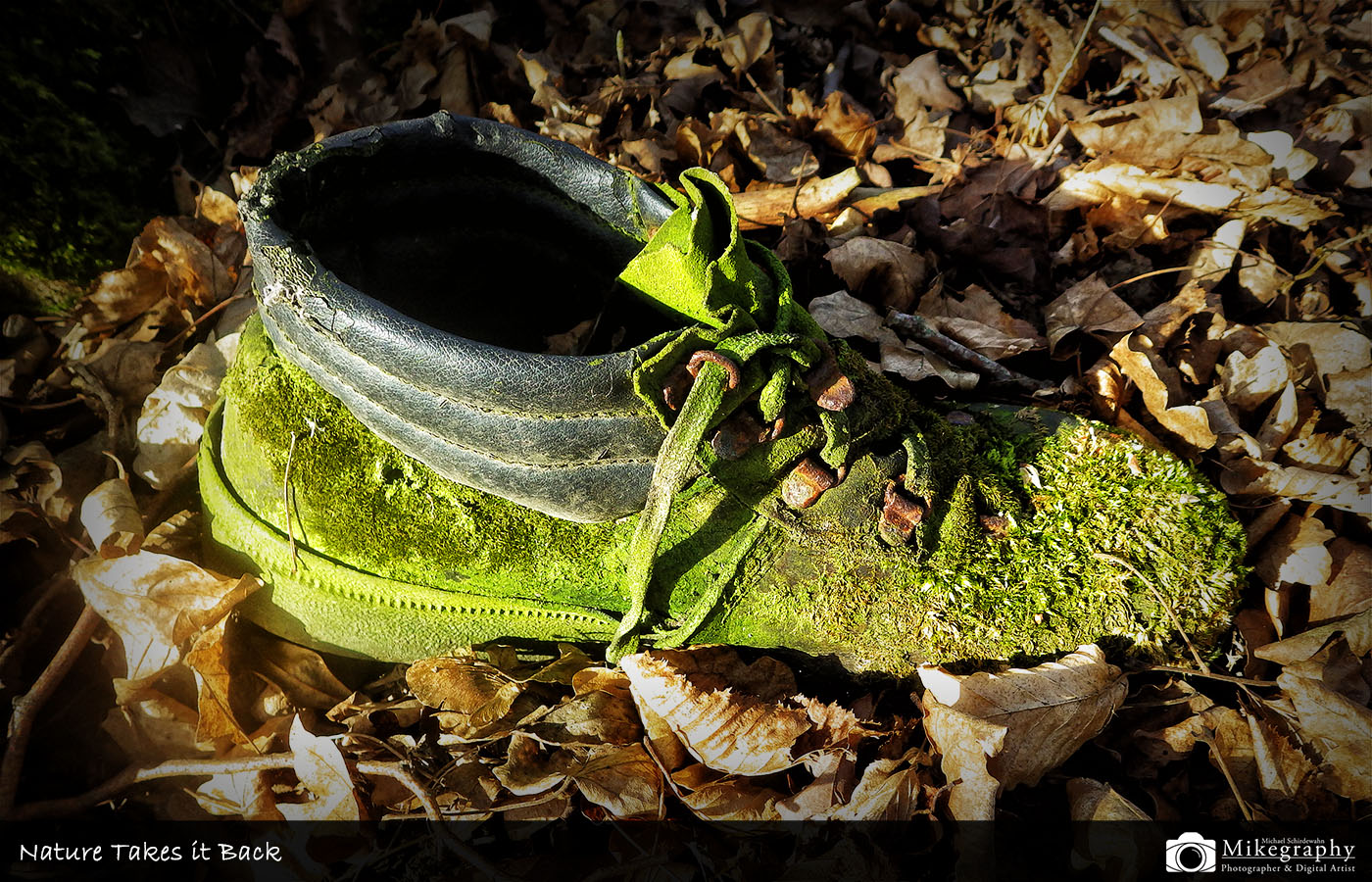 Nature Takes it Back - Schuh im Wald