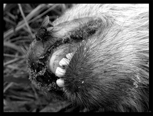 natures mortes 3