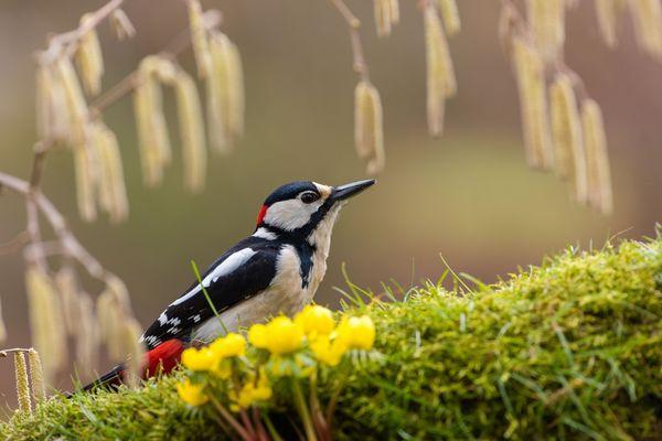 Naturfotografen-Frühlingsmenue...