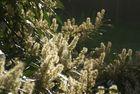 Naturfotografie Frühling - Sommer