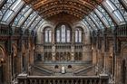 Naturkundemuseum London, Treppenaufgang