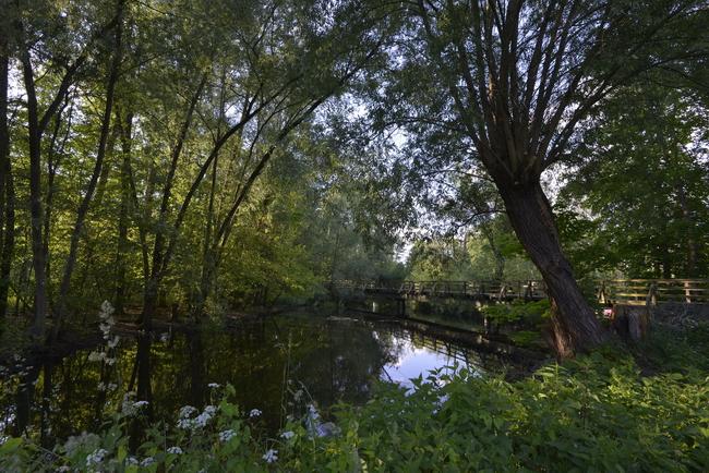 Naturlandschaft in Berlin - das Tegeler Fließ