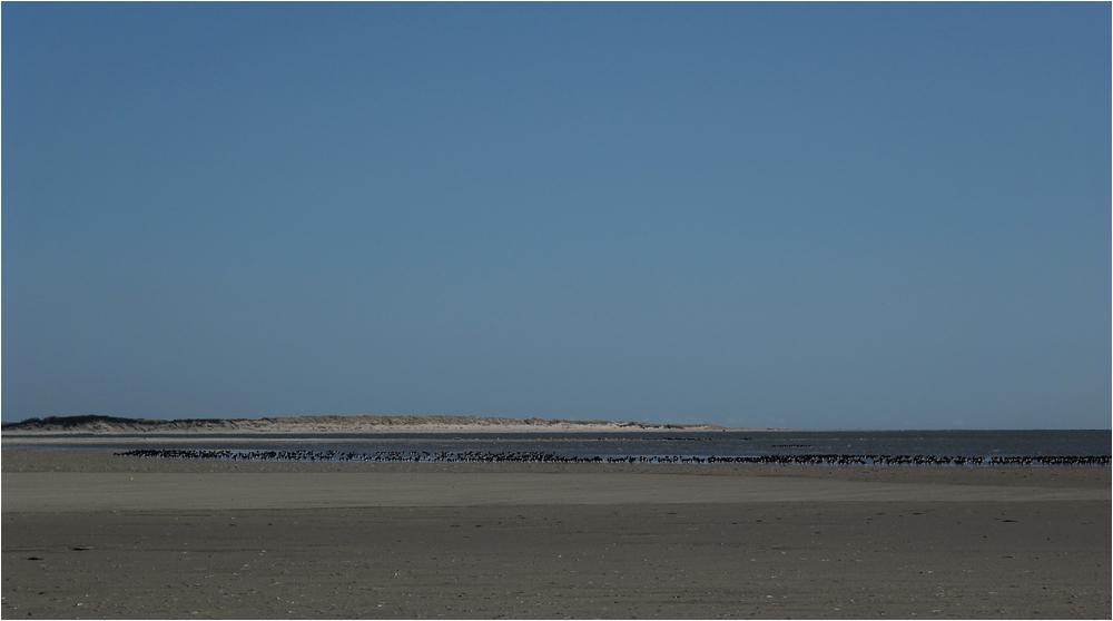 Naturparadies am Ostende von Langeoog