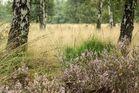 """Naturpark """"De Meinweg"""""""