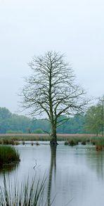 Naturpark Schwalm-Nette | De Wittsee - Landschaftsfotografie