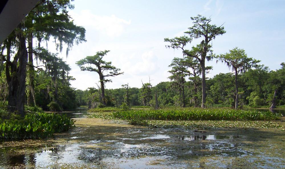 Naturpark Wakulla Springs in Florida