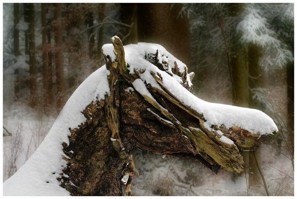 Naturpferd im Märchenwald