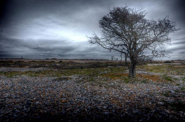 Naturreservat Dungenes Graftschaft Kent