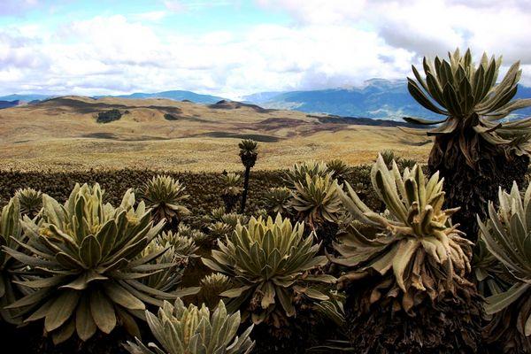 """Naturreservat """"El Ángel"""""""