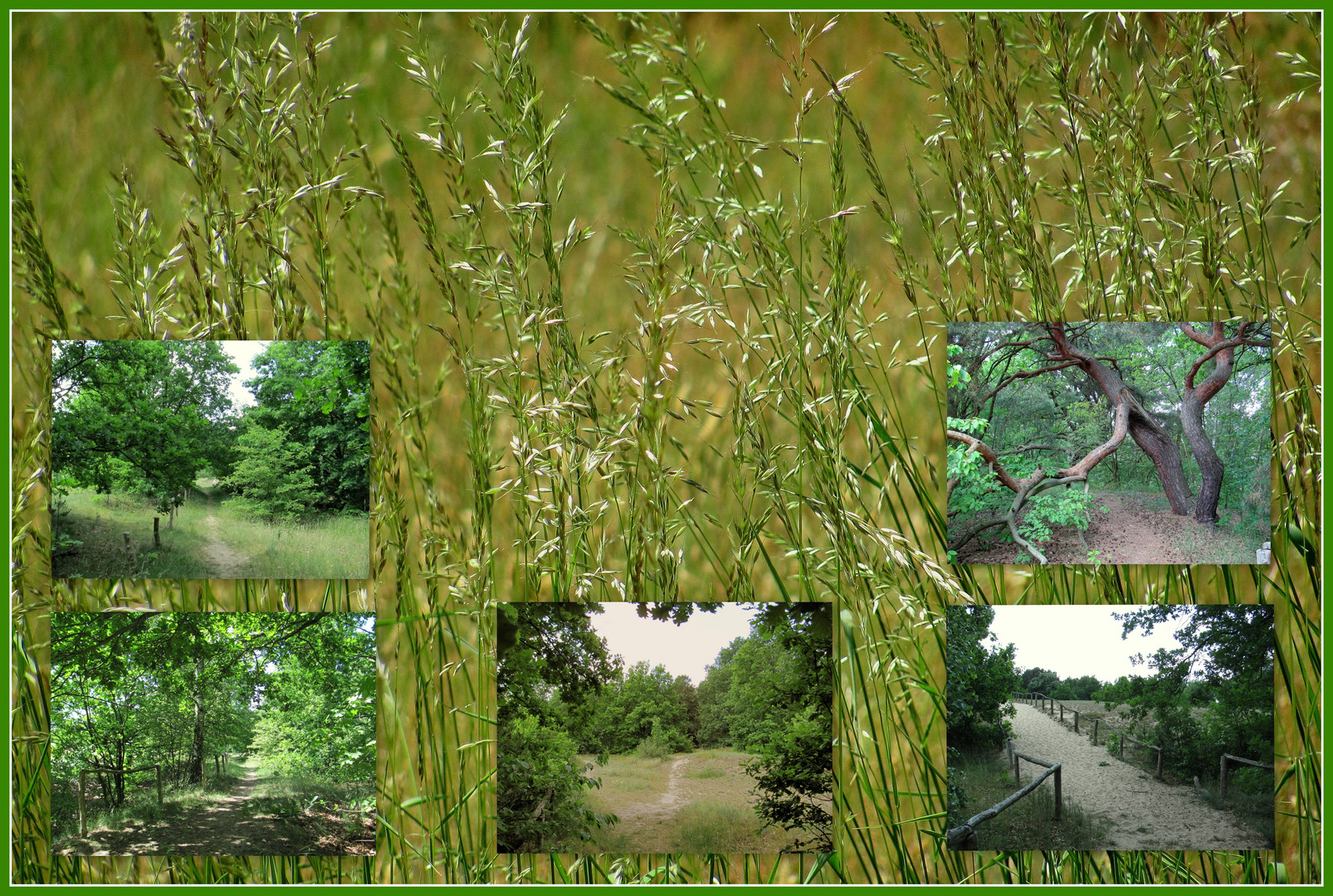 Naturschutz Gebiet