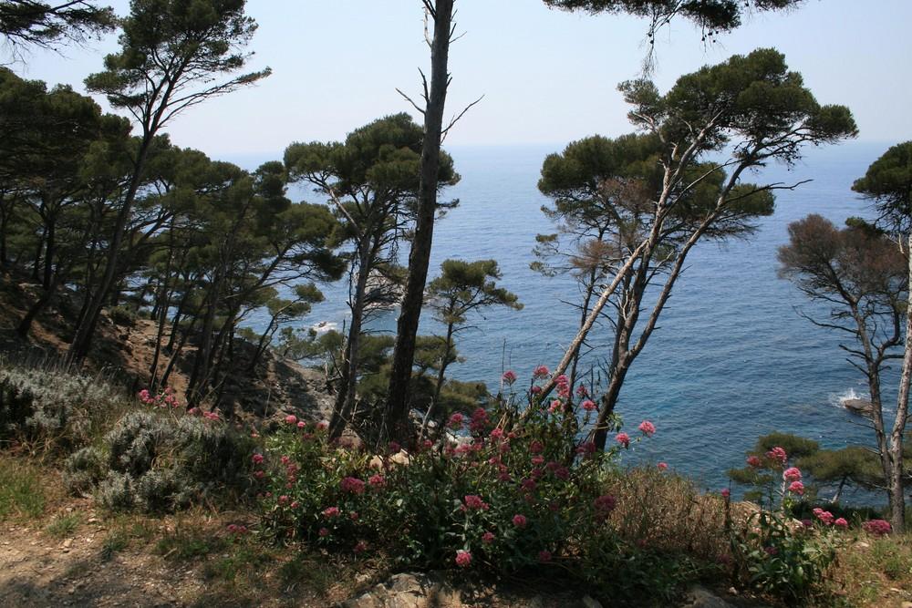 Naturschutzgebiet am Meer