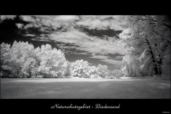 Naturschutzgebiet - Biedensand