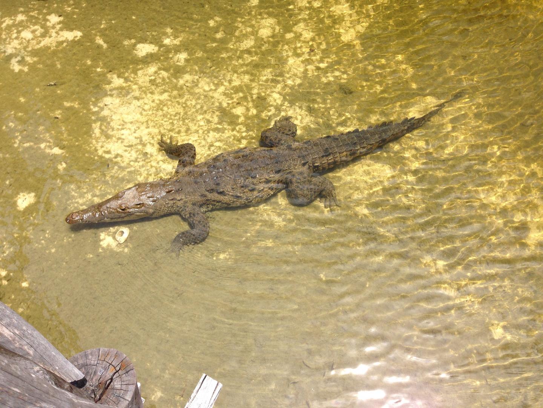Naturschutzgebiet Cozumel
