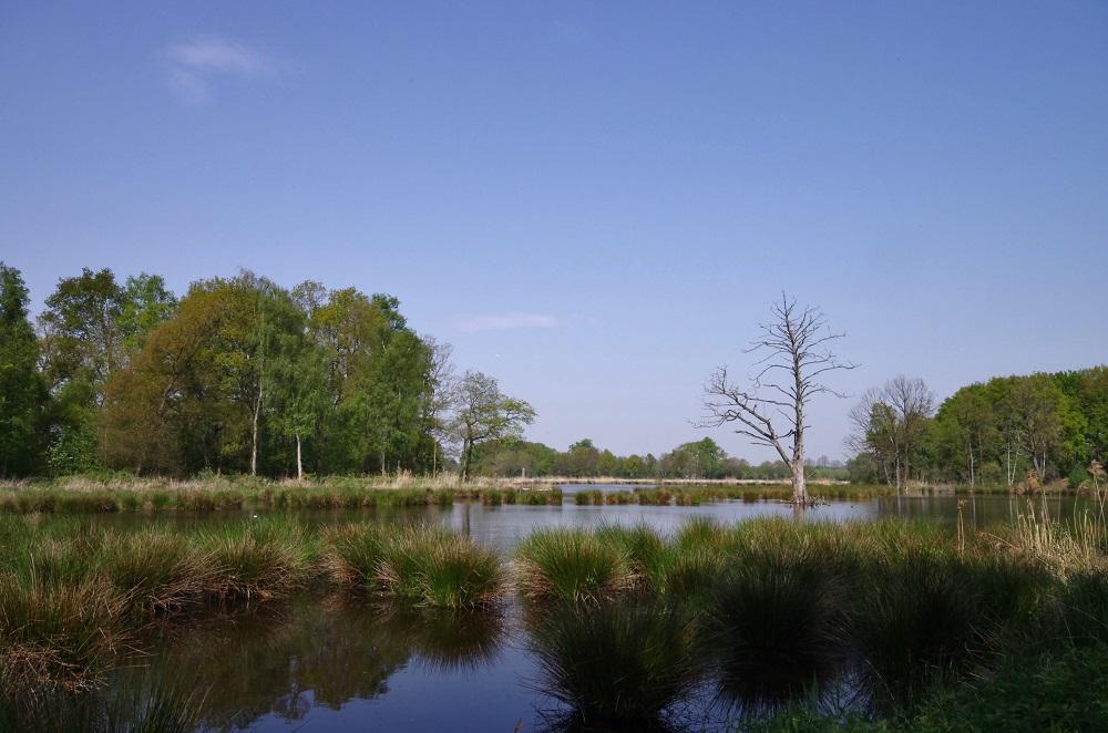 Naturschutzgebiet de Witt See