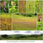 """Naturschutzgebiet """"Hörbacher Viehweide"""""""