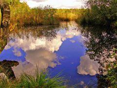 Naturschutzgebiet lüntener Fischteich / Vreden