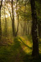 Naturschutzgebiet Zwillbrocker Venn 1
