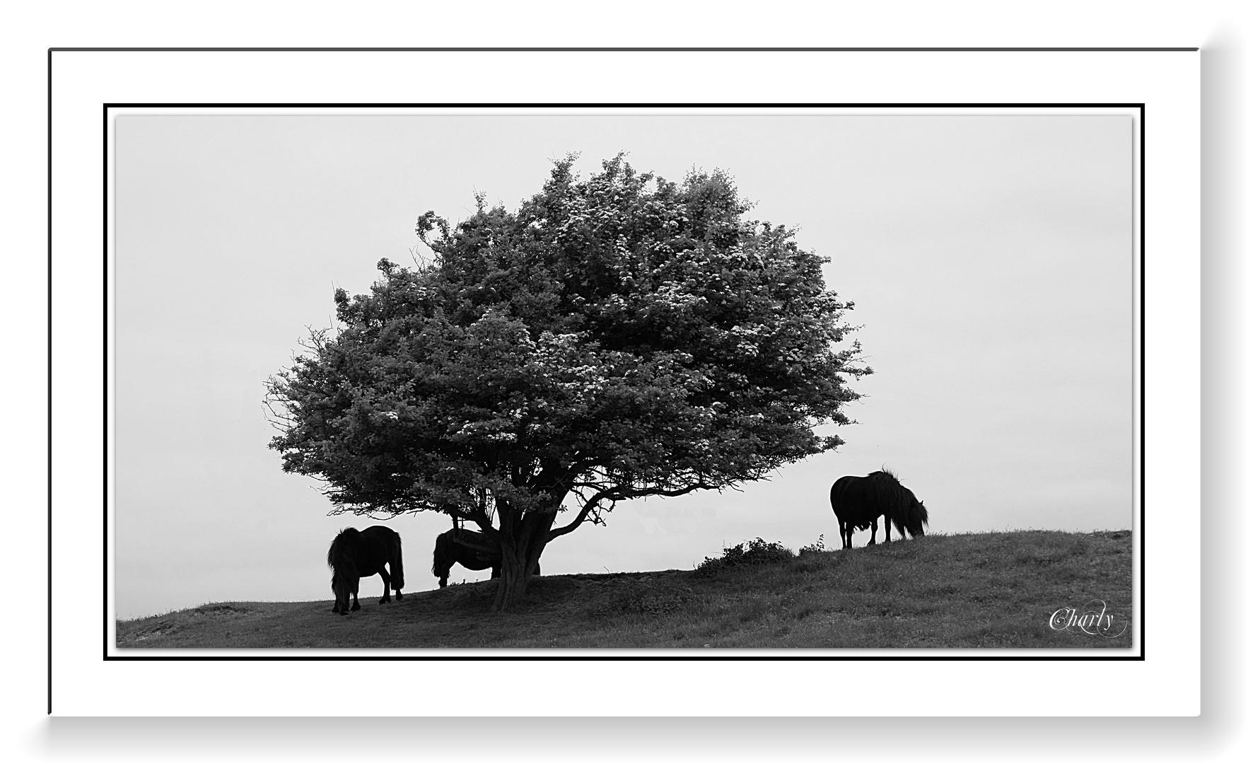 Naturschutzgebiet....Oranjezon....Walcheren / Zeeland / Holland