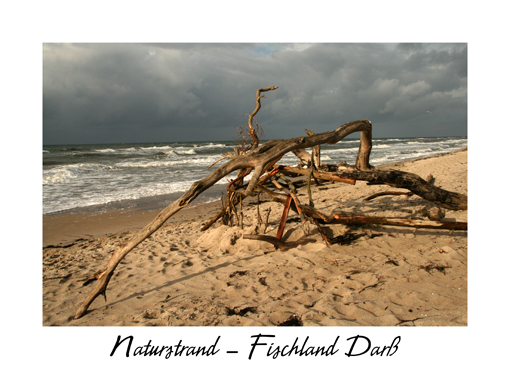 Naturstrand - Darsser Weststrand