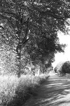 Naturstraße