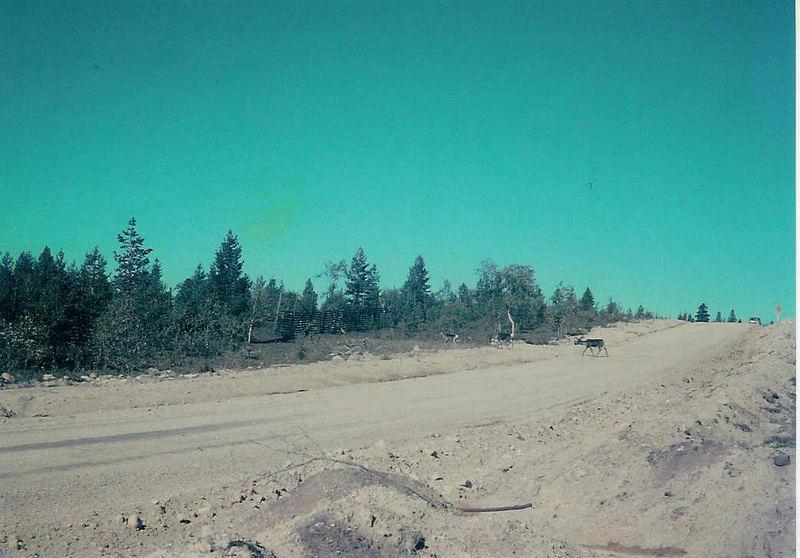 Naturstraße im Lappland (1970)