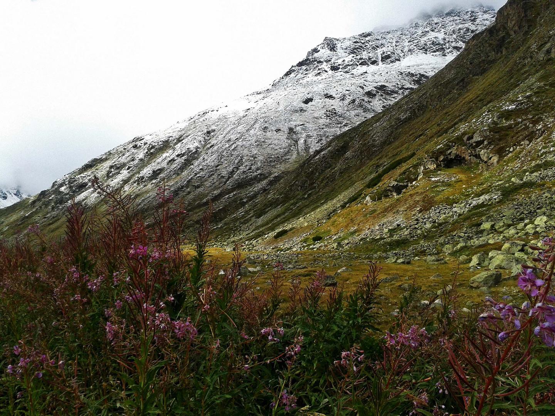 Naturszene im Schweizer Alpen...