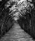 Naturtunnel
