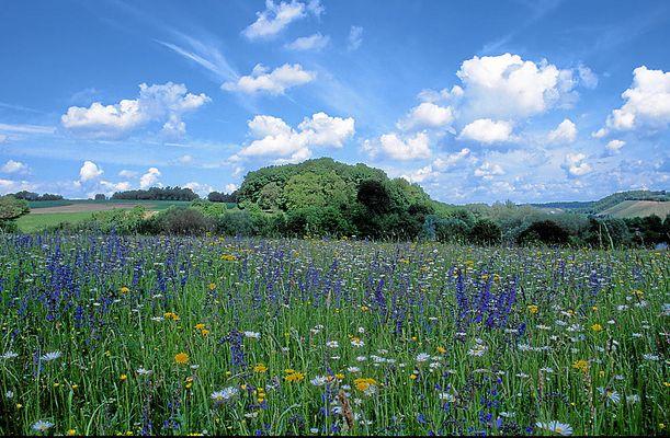 Naturwiese im Kraichgau