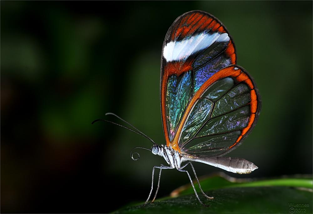 NaturWunder