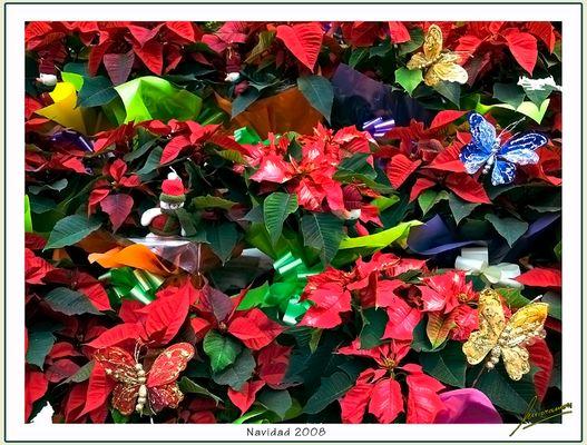 Navidad 2008 / Un toque de color y alegría para este año tan ... especial.
