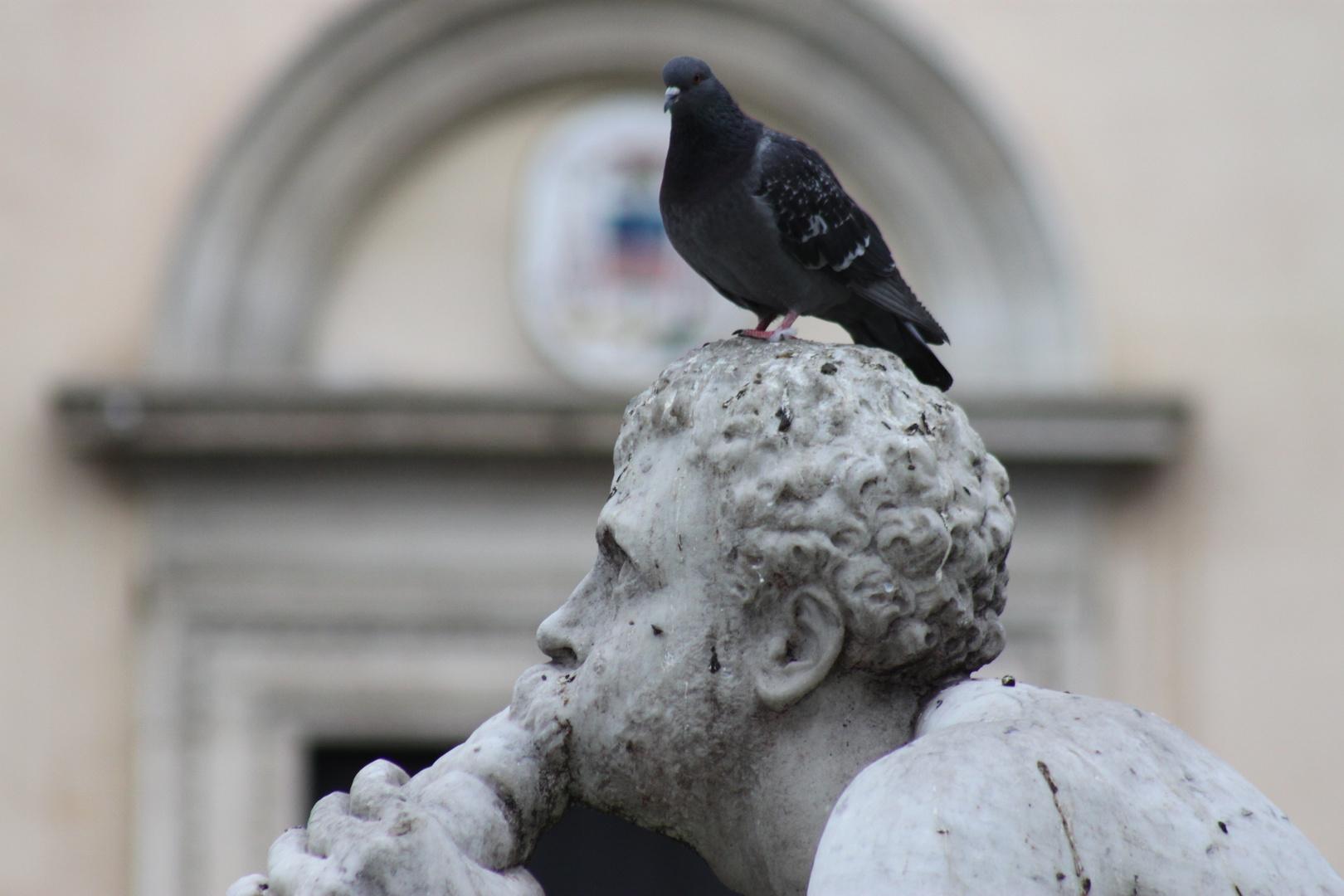 Navona - Roma - IT