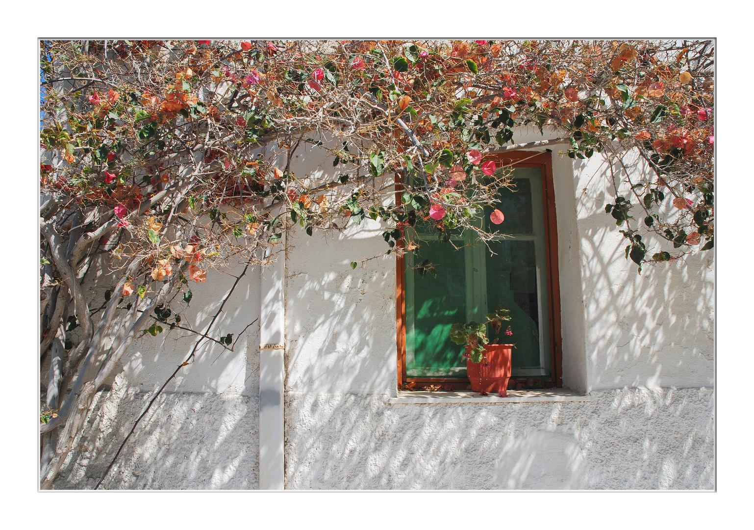 Naxos - Fenster mit Bougainvillea