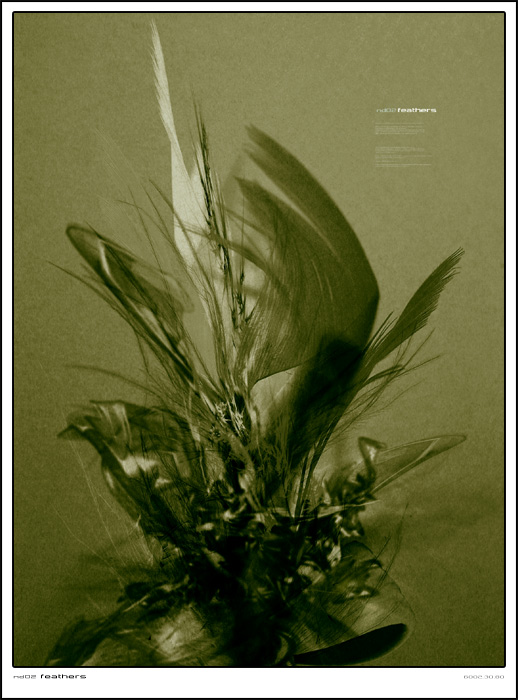 nd02 _feathers