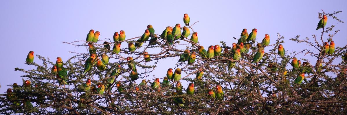 Ndutu, Tansania