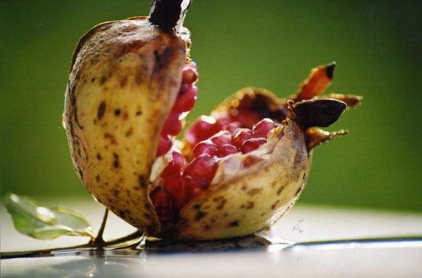 `Ne echte Granate dieser Apfel