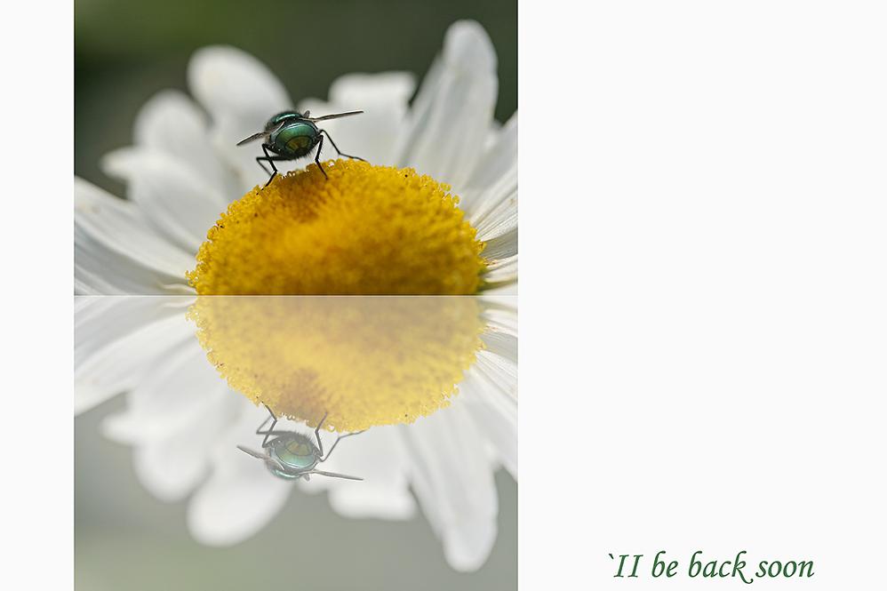 ne Fliege...
