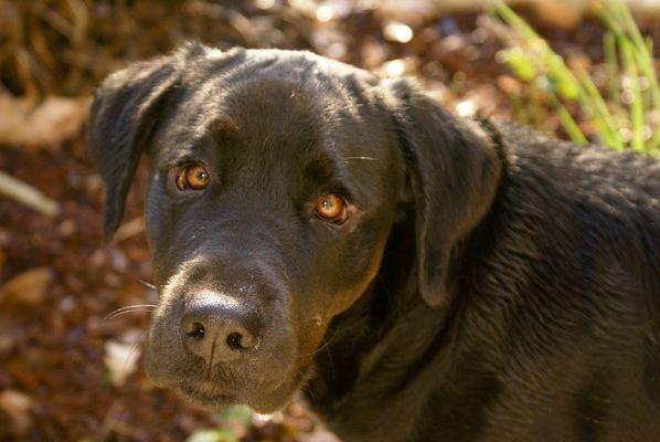 Ne laissez pas votre chien en laisse si vous voulez qu'il vous soit attaché (Albert Willemetz)