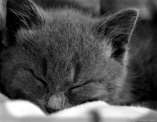 Ne réveillez pas le chat qui dort